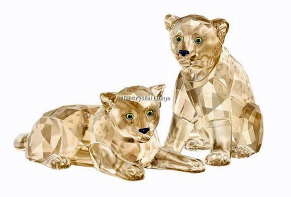 Swarovski_2019_SCS_Leopard_cubs_5428542 | The Crystal Lodge